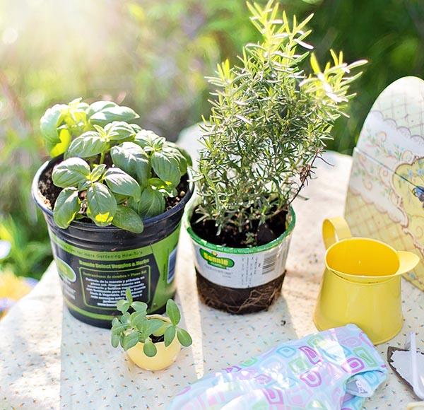 Plante et graine magasin action